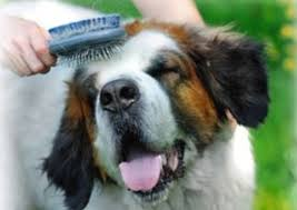 Brush! For health and happiness